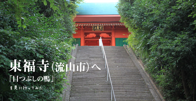 目つぶしの鴨、東福寺へ