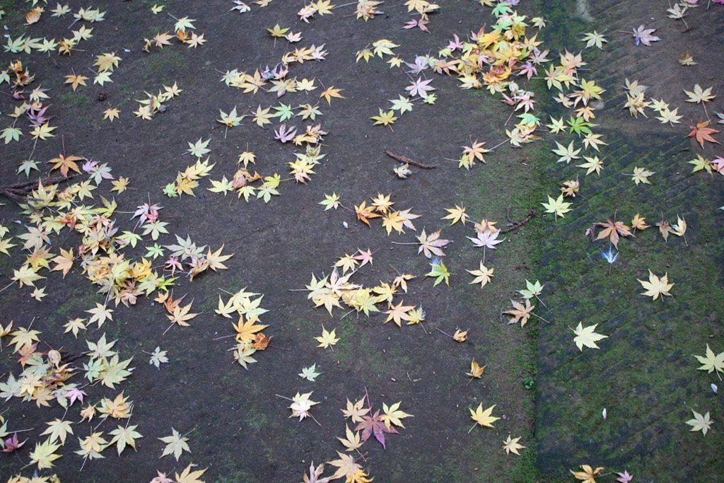 七色虹落ち葉